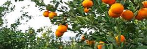 arance-Biosmurra-2